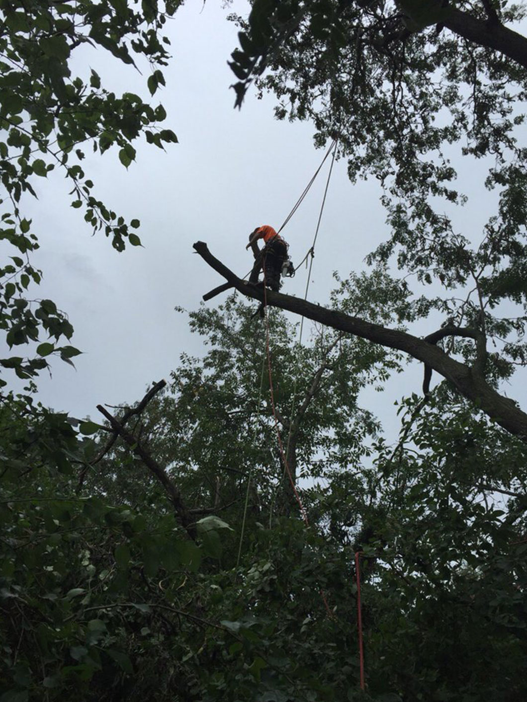 arborist cutting a tree in Kansas City, MO