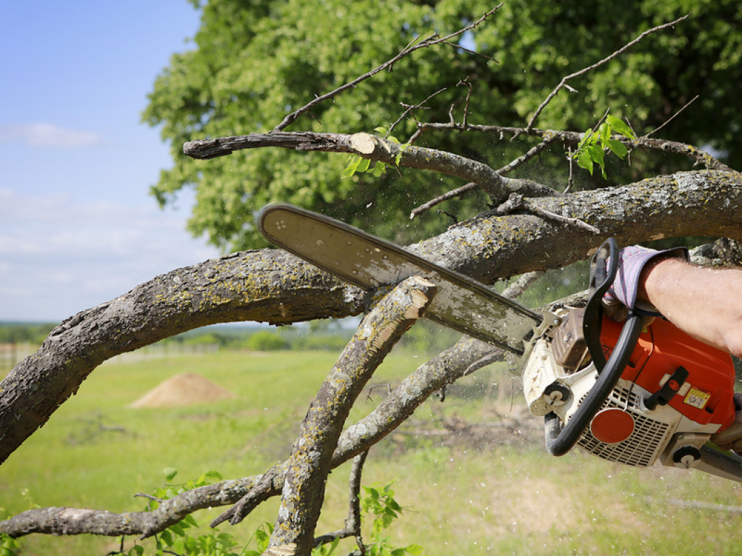 3 reasons to regularly trim and prune your trees
